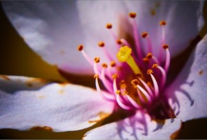 viragmuhely.hu - virág rendelés