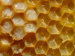 A méhpempő hatása
