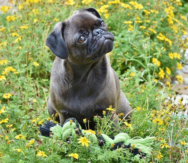 hipoallergén kutyatáp