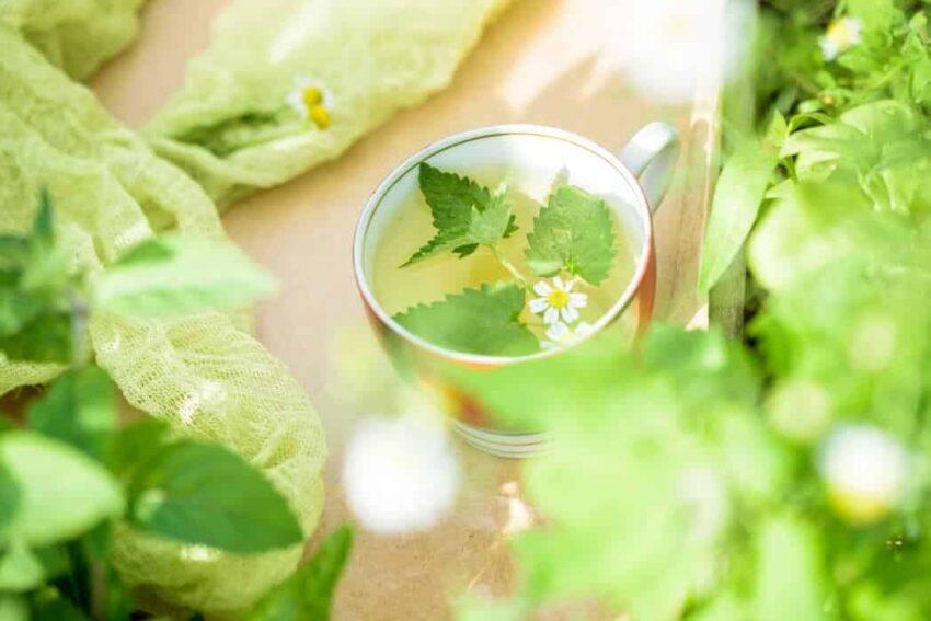 citromfű tea készítése